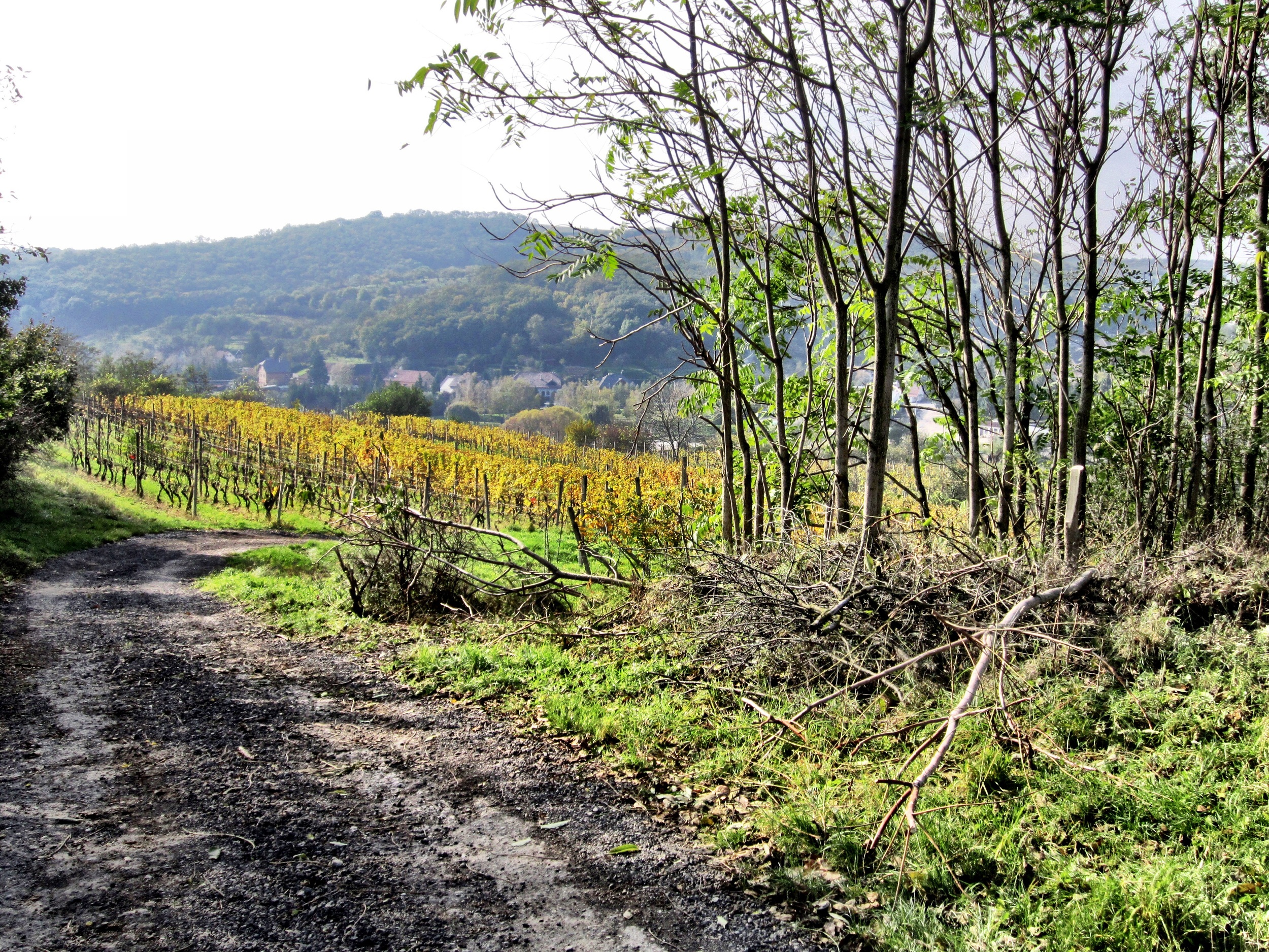 Walking home from the Stavek vineyards for lunch, this was waiting around a bend