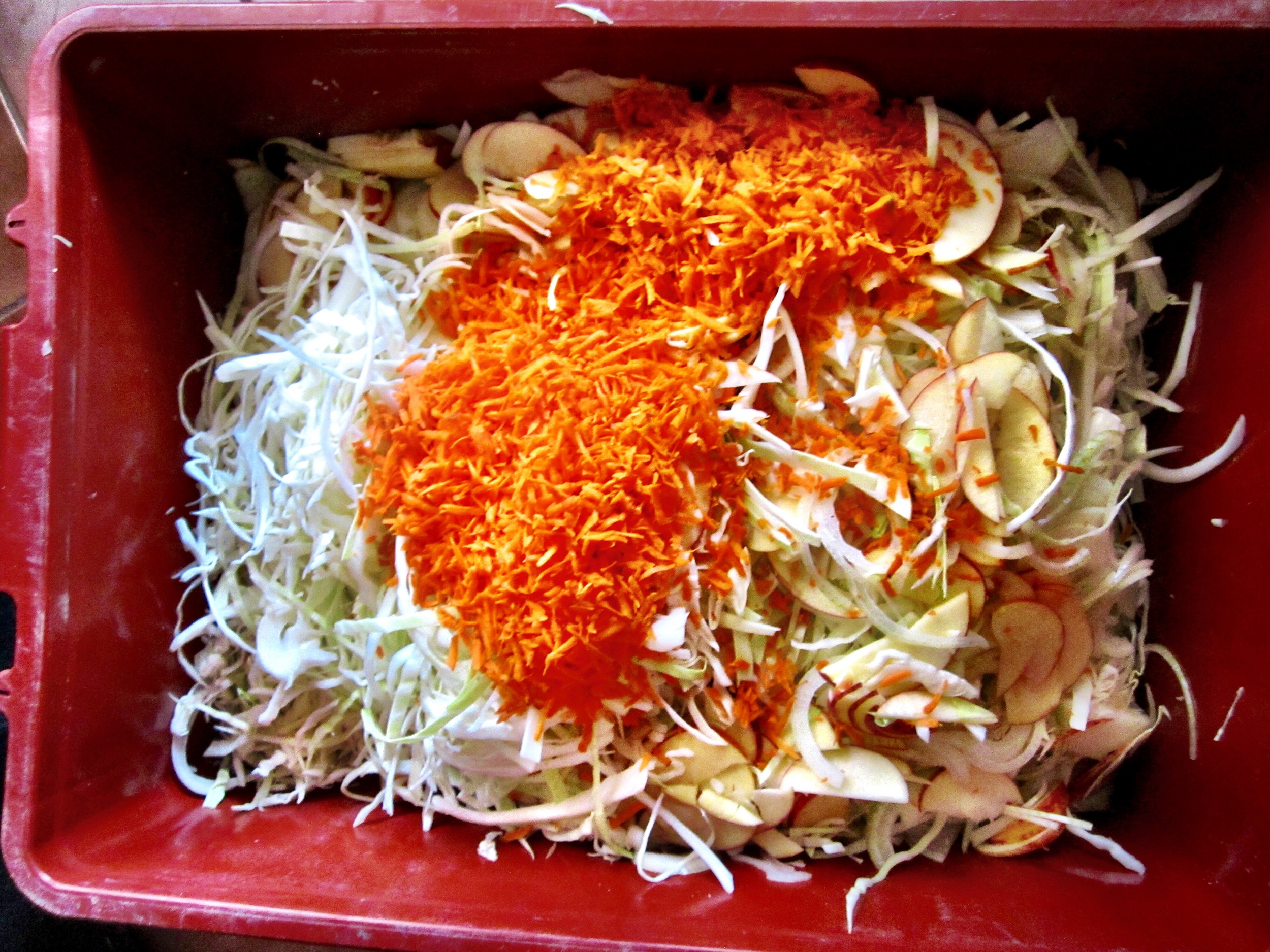 The fresh cabbage, apple, carrot, onion, horseradish mixture pre-pickle.