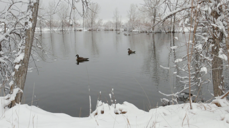 winter_geese.png