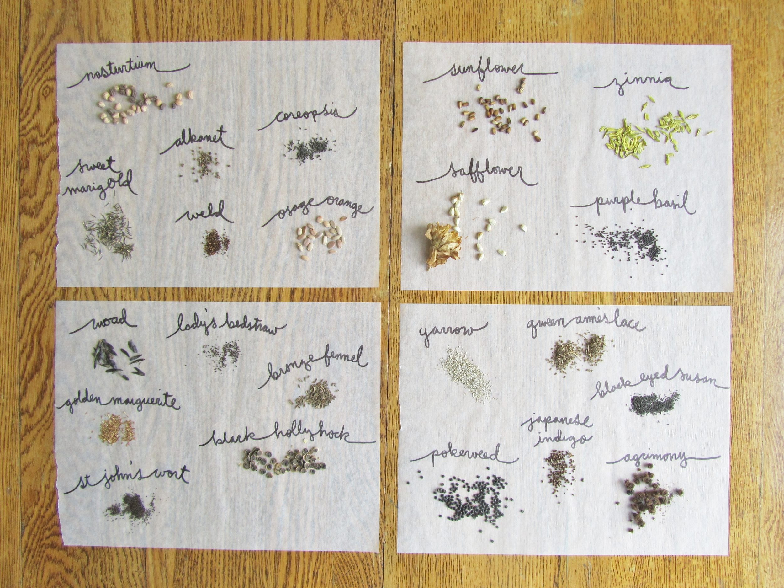variety of dye plant seeds