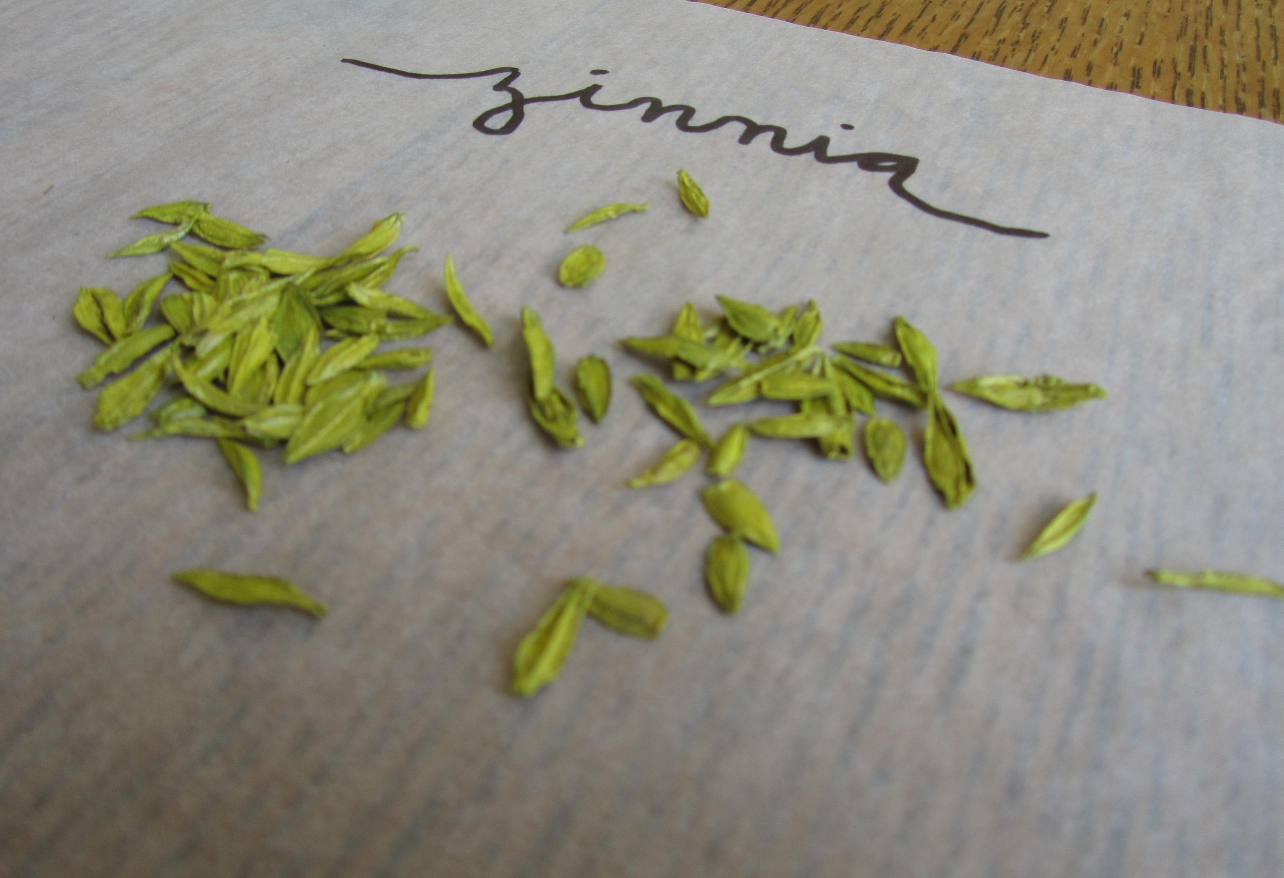 zinnia seeds
