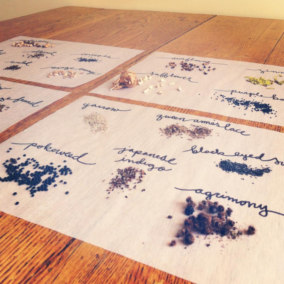 dye plant seeds