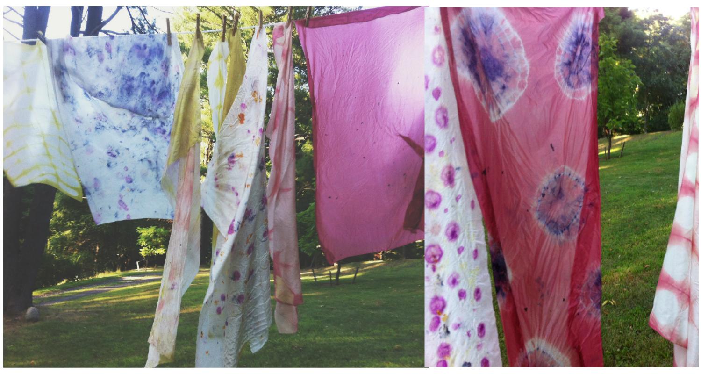 the dogwood dyer image 4.jpg