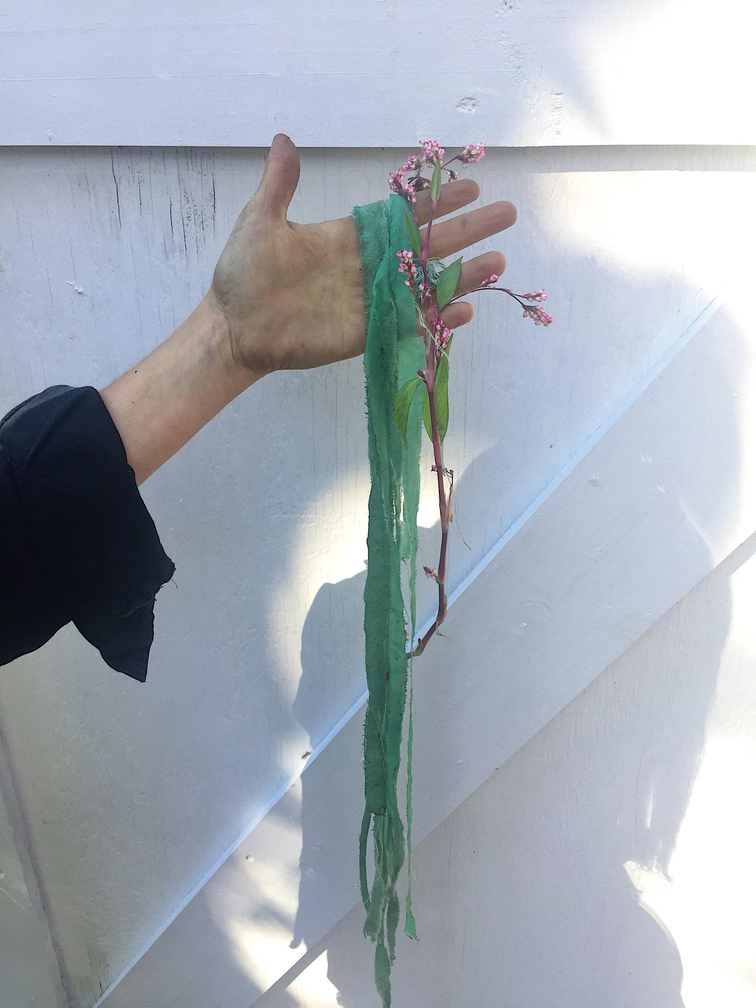 fresh leaf indigo dyeing silk at Maple Shade Farm in upstate NY
