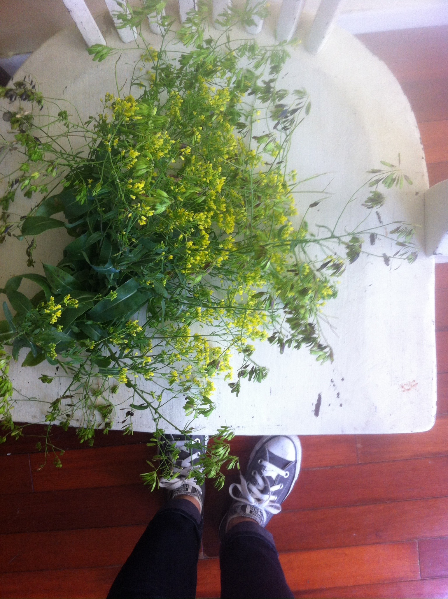 harvested woad from brooklyn tree guard dye gardens to save seed
