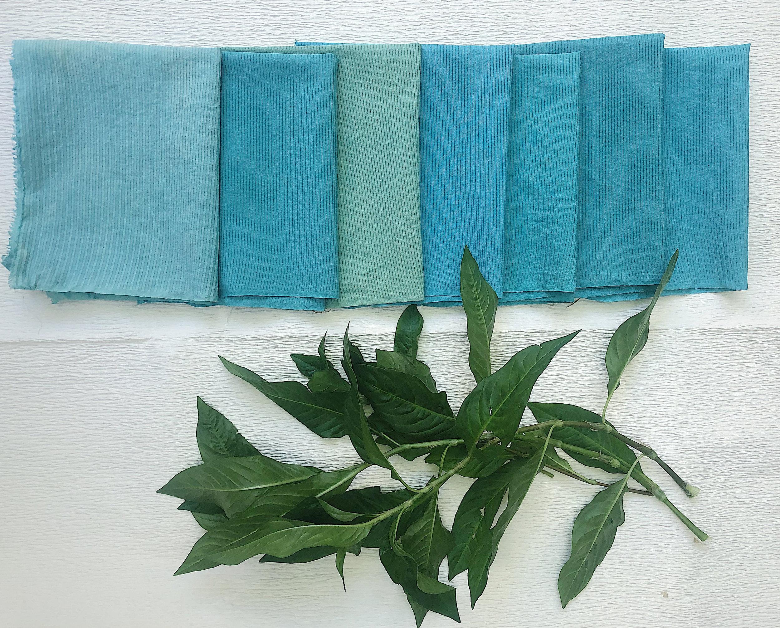 Fresh Leaf Indigo Dyeing Tests