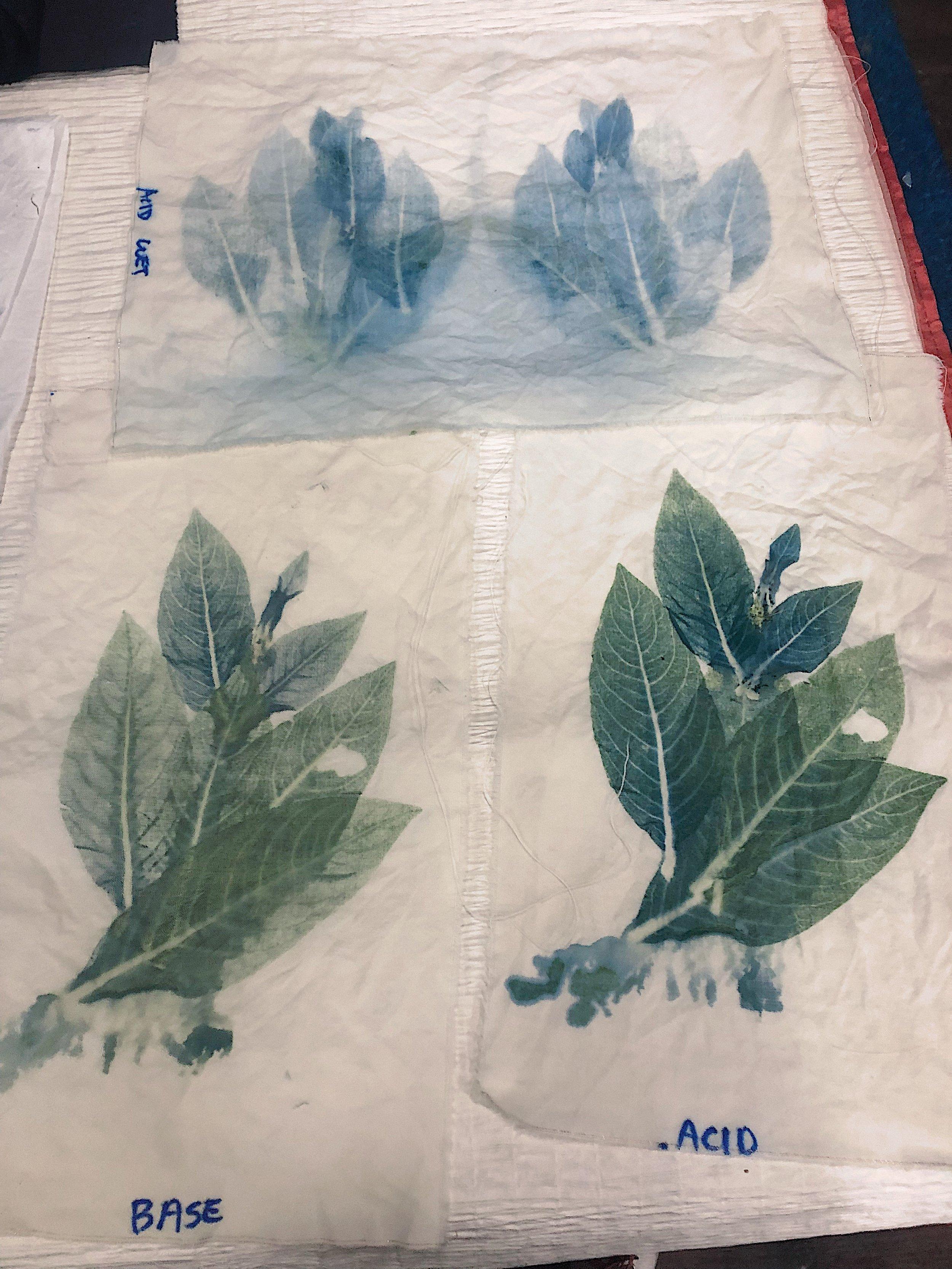 John's indigo leaf prints using pH modifications