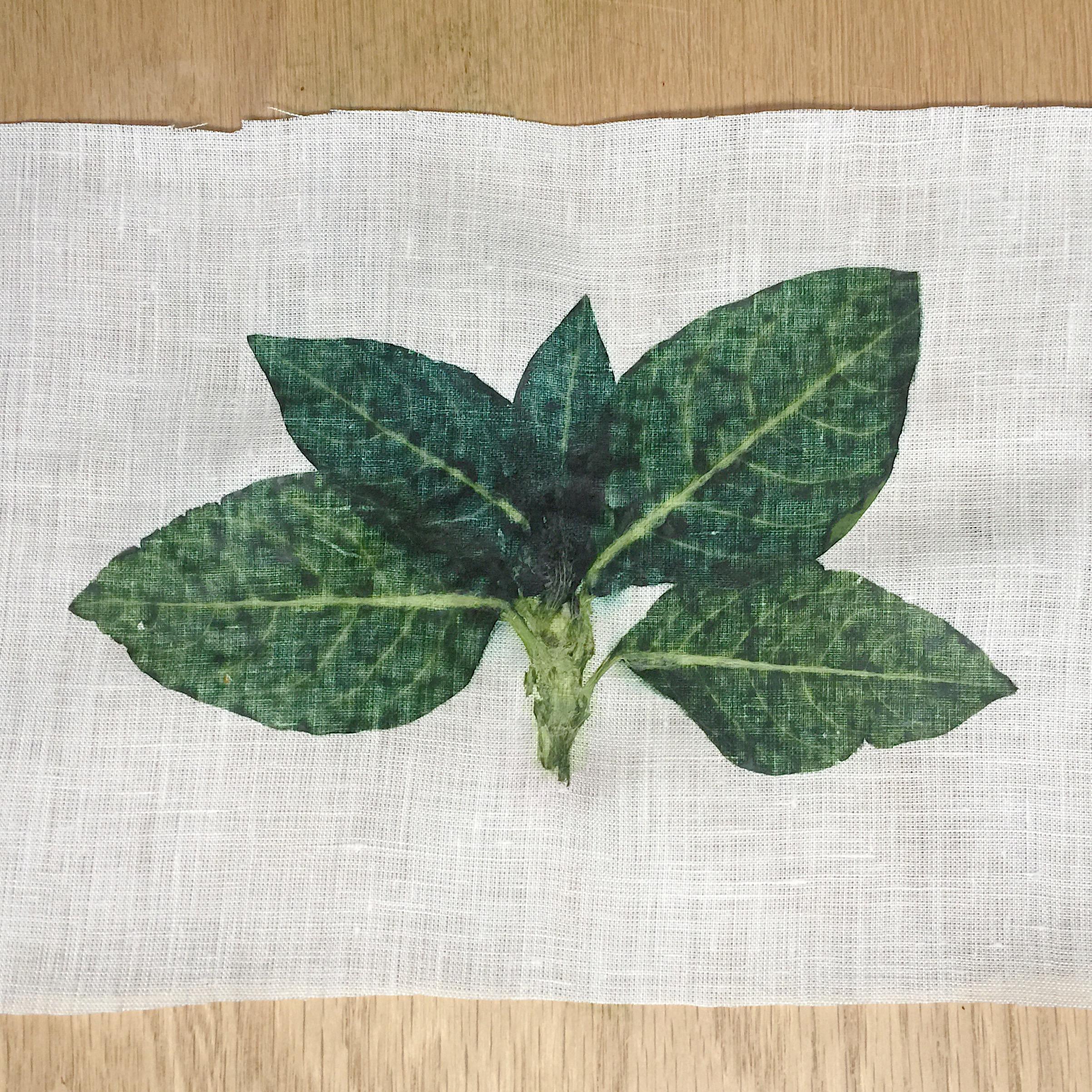 indigo leaves hapazome