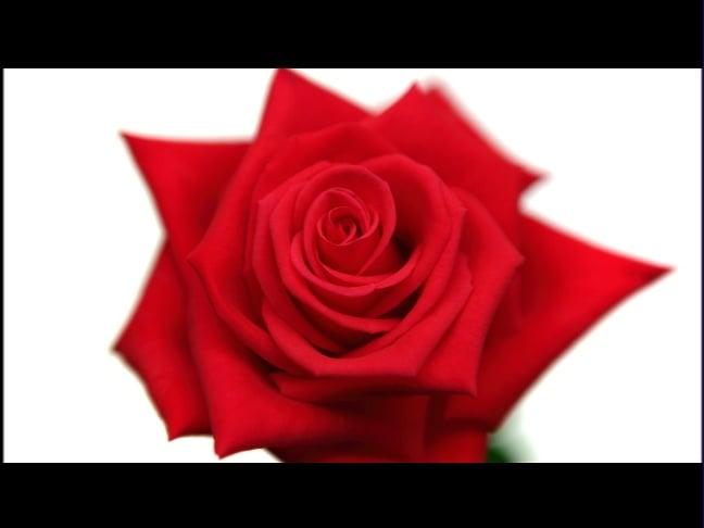 Rose Bowl I Creative Director