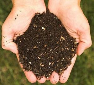 compost in hands.jpg