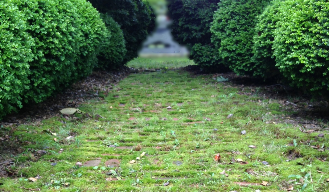 brick & moss walkway