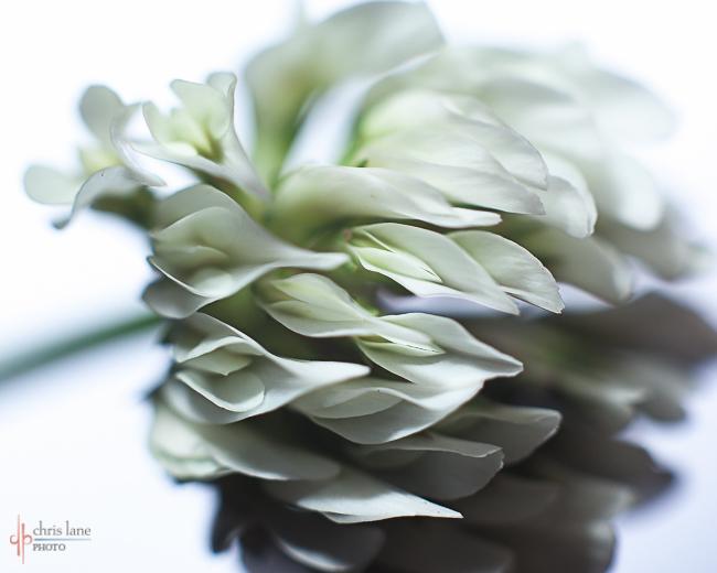 """""""Flowing White"""" © Chris Lane Photo"""