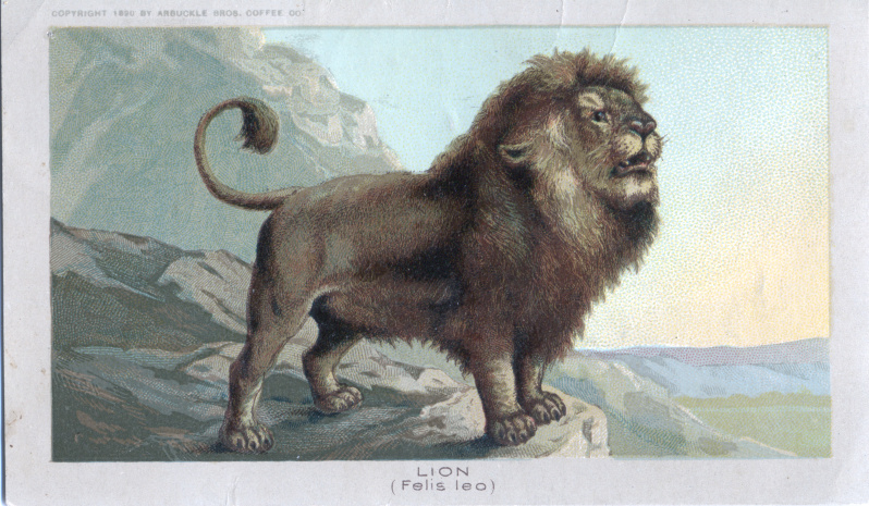 Lion - Arbuckle Bros. Coffee Co. (1890)