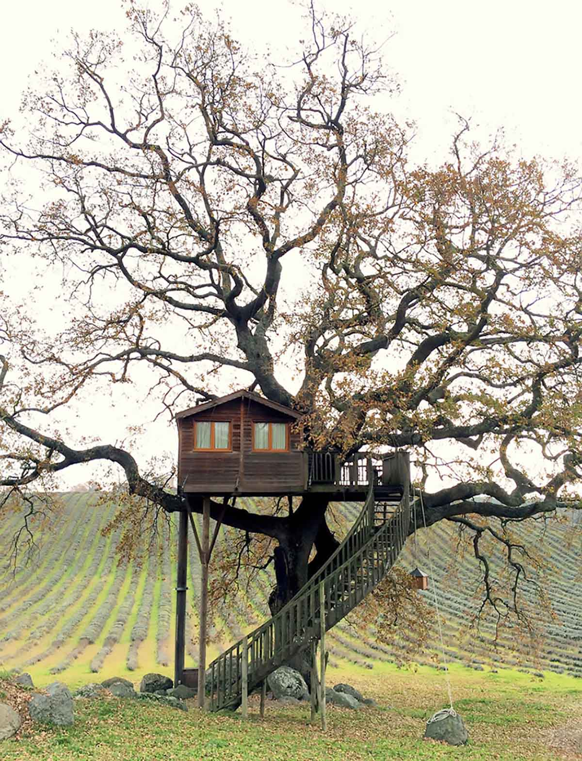 incredible treehouse in tuscany