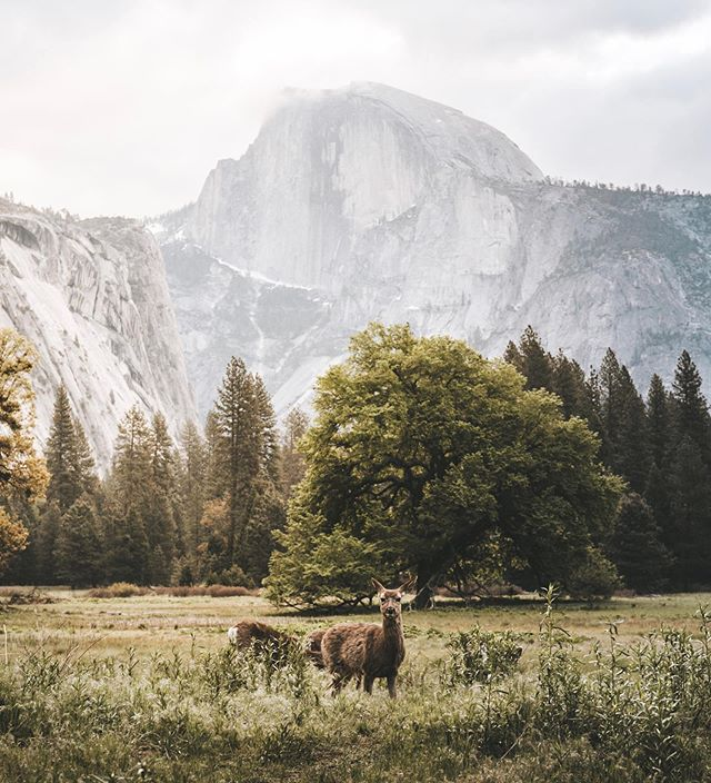 Waking up in Yosemite. #yosemite #yosemitenationalpark