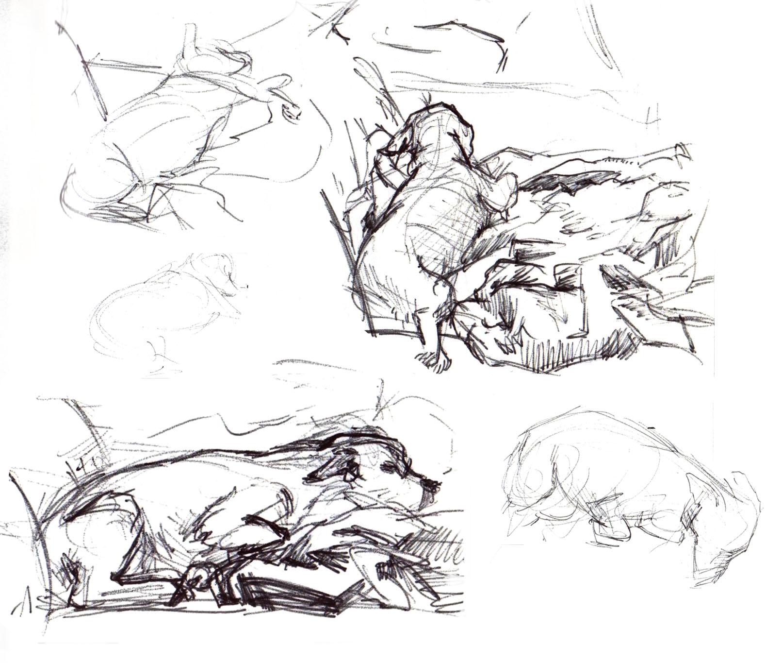 sburtner_dog sketches.jpg