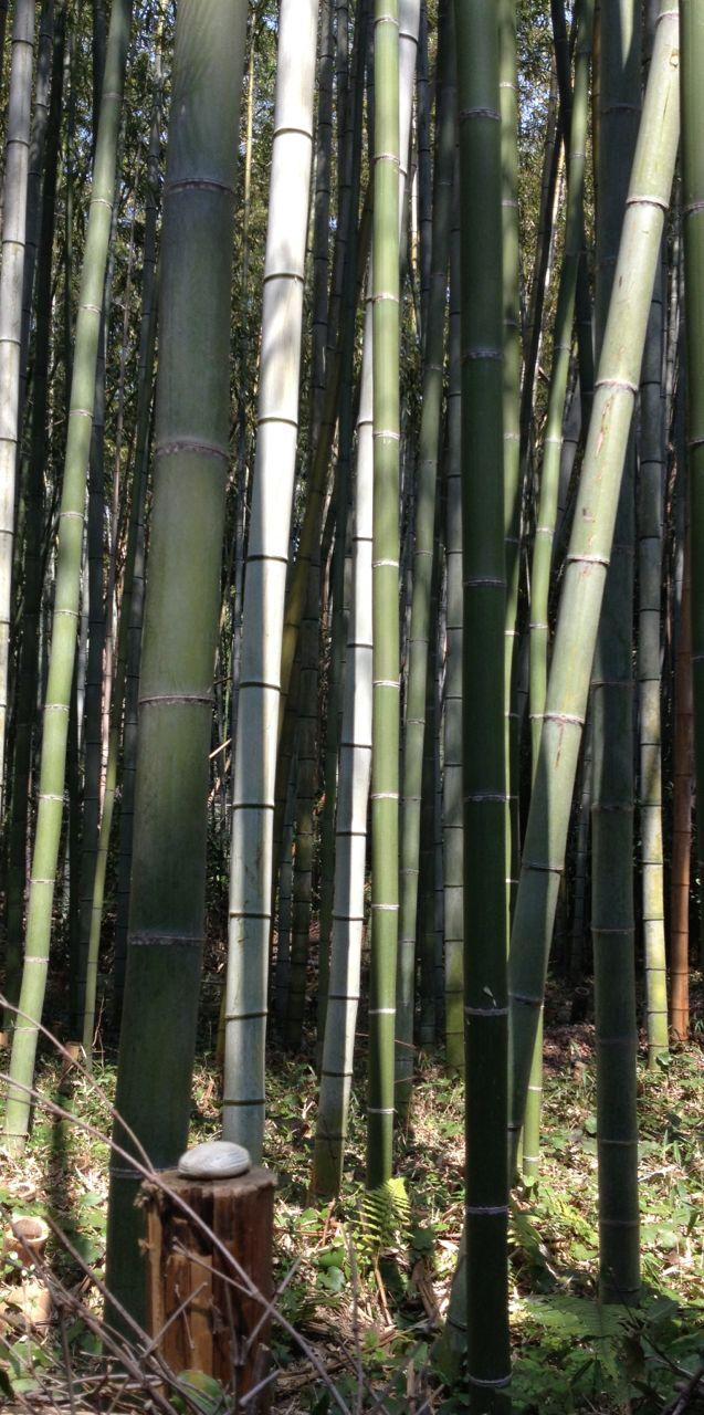 arashiyama . kyoto . japan 24.03.14