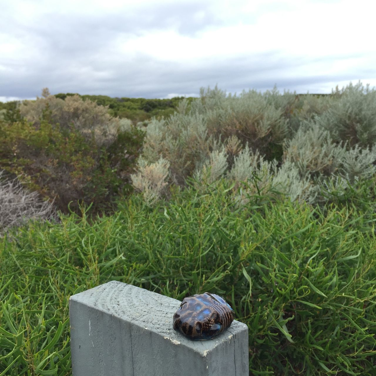 cape naturaliste . wa . australia 23.03.16