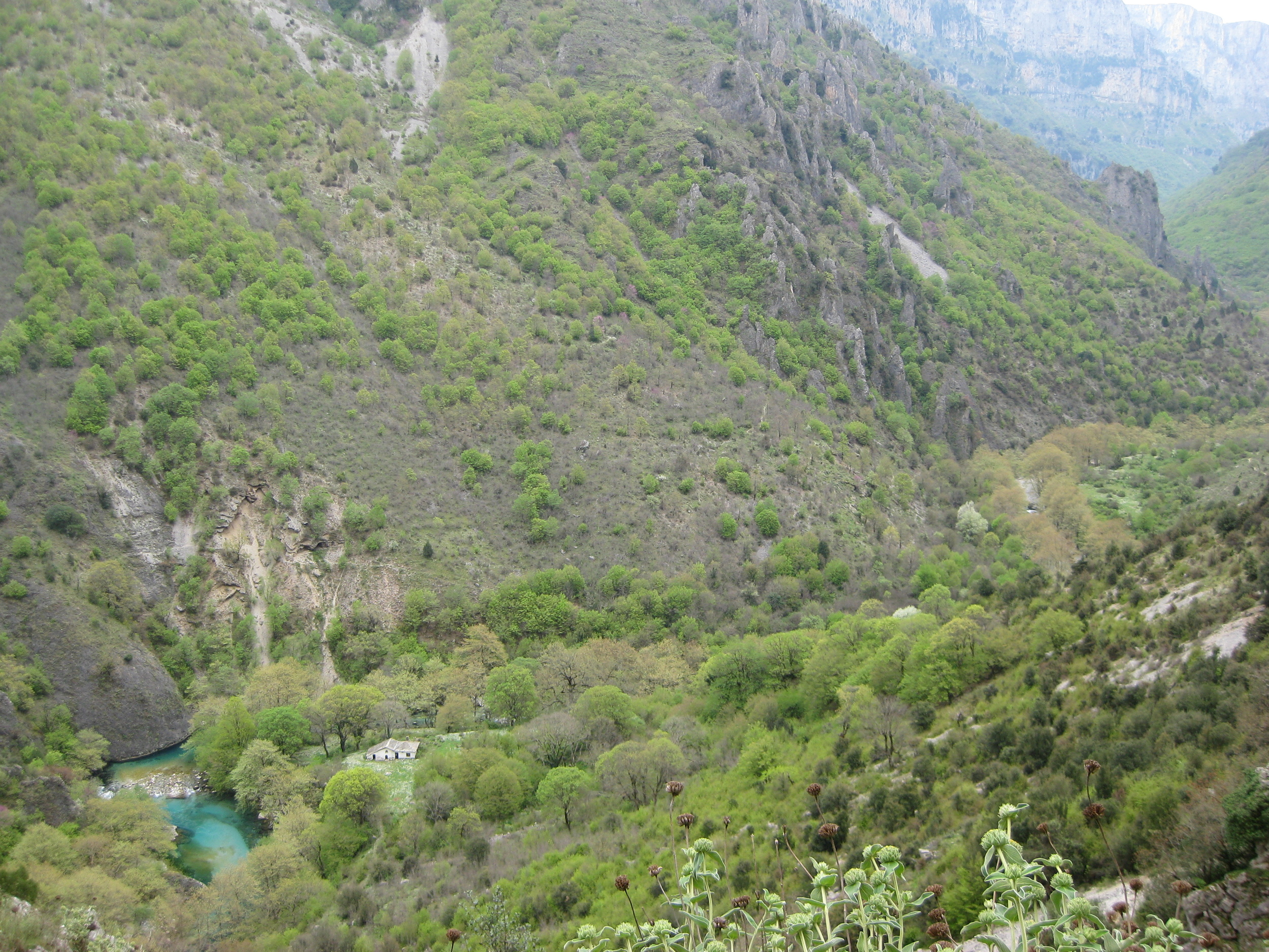 Climbing above the Vikos gorge. Down below our flower carpeted picnic spot