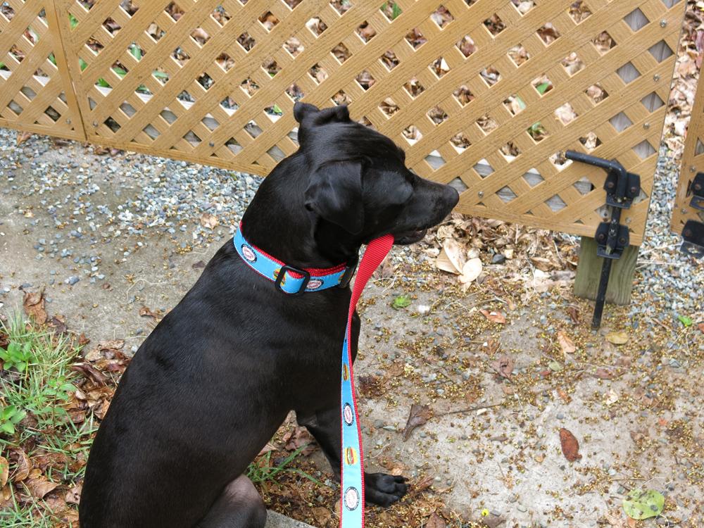 skinny dog leash back.jpg