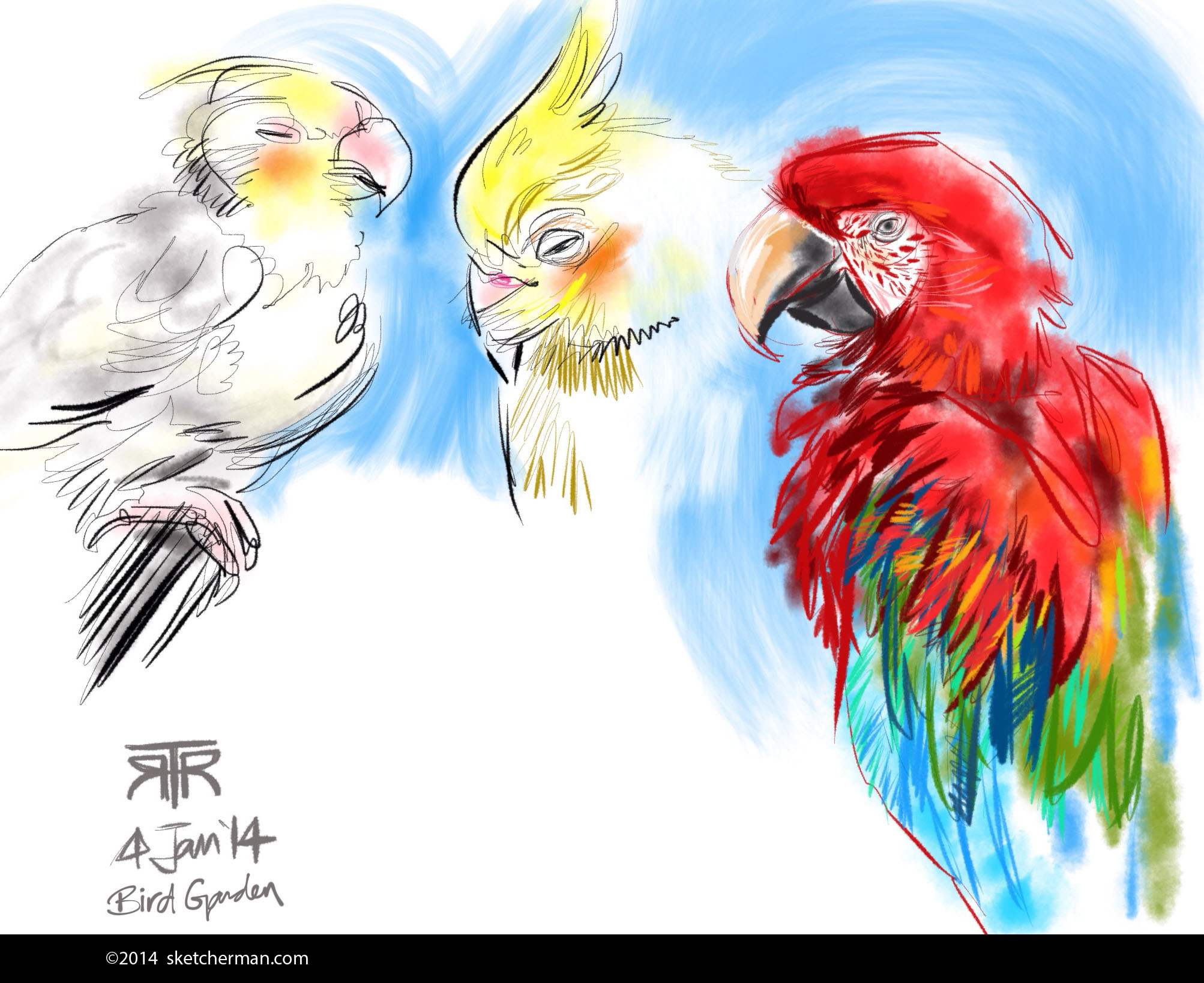 4Jan14-RRT-Birds.JPG
