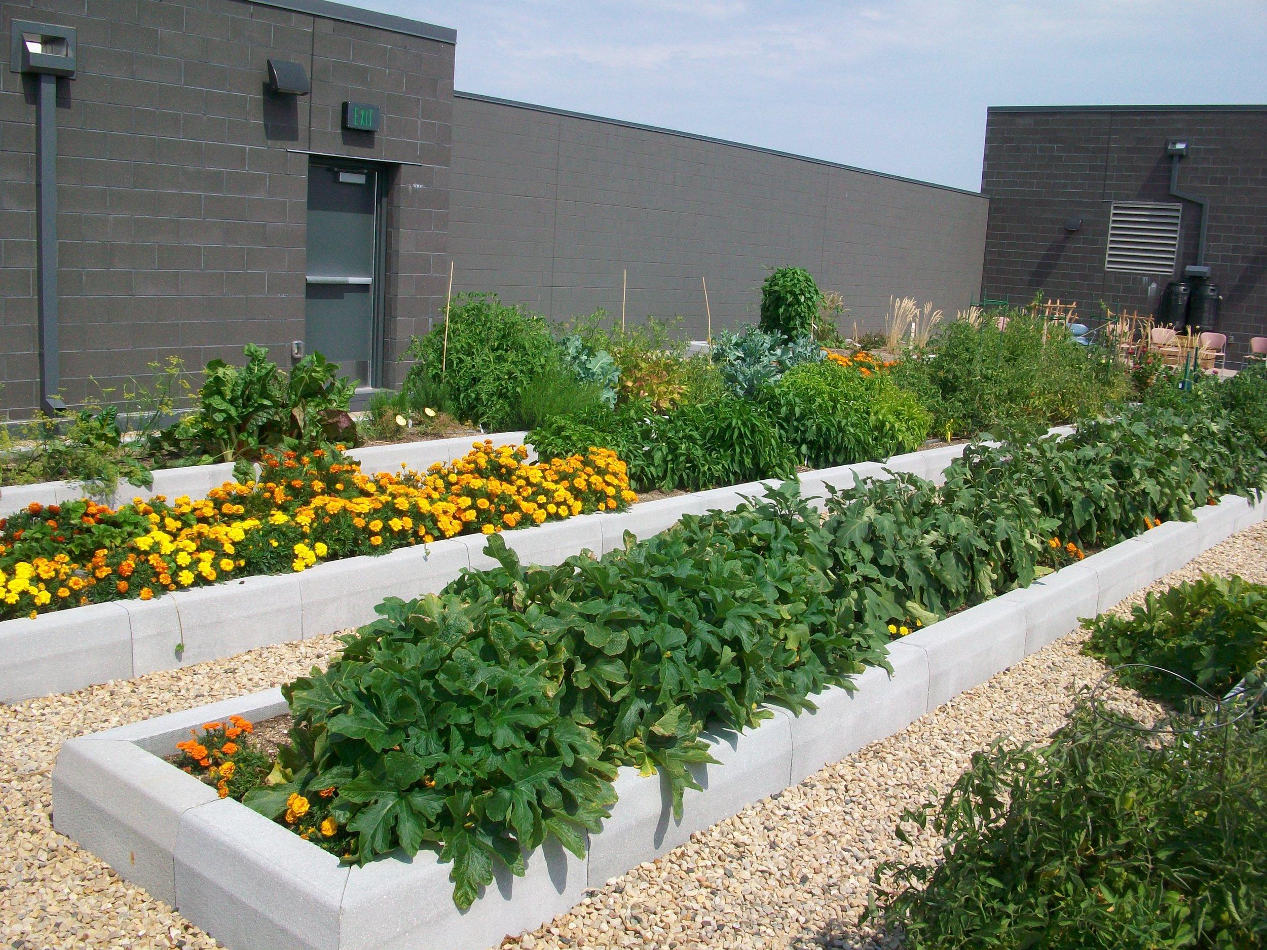 Garden abundance.JPG