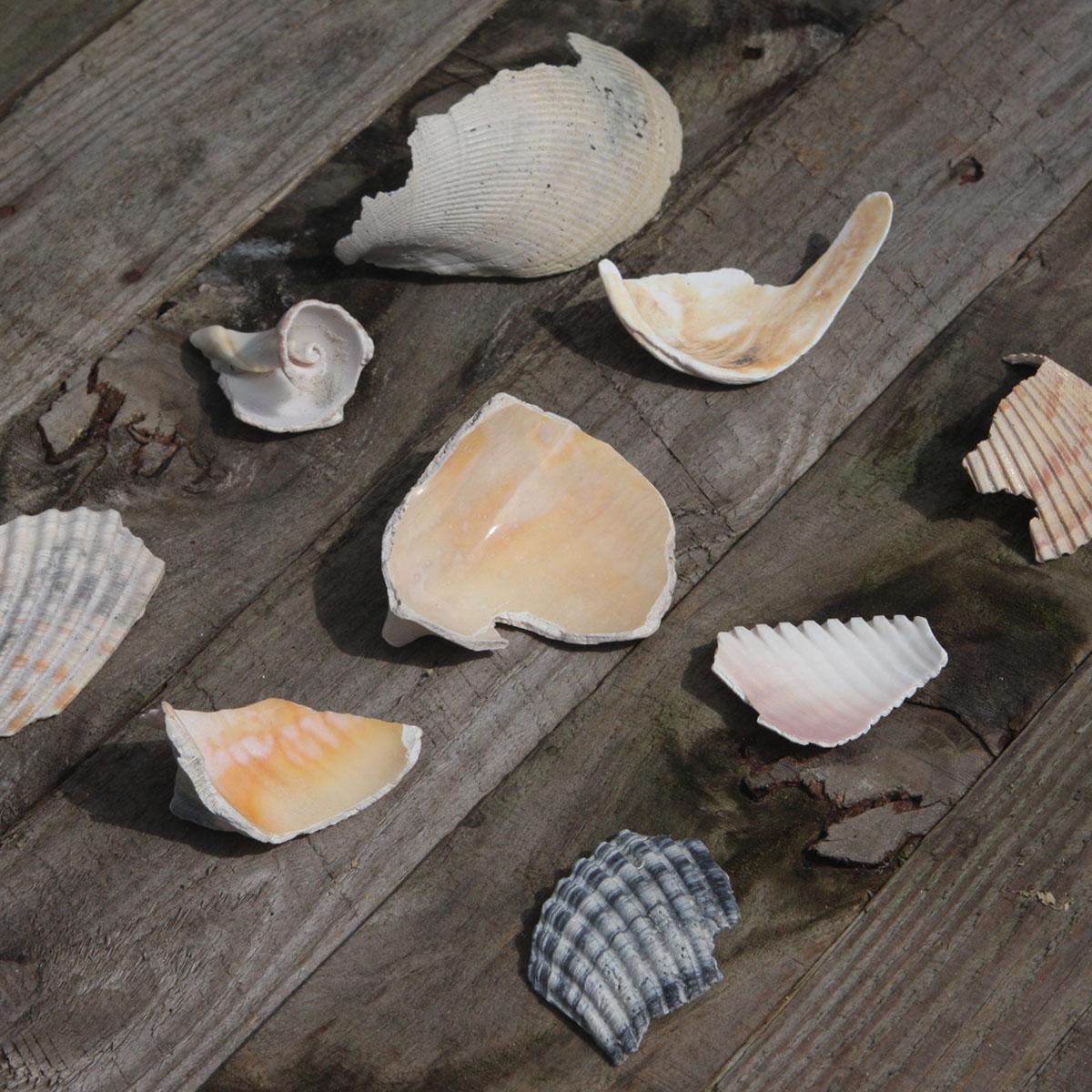 shells7