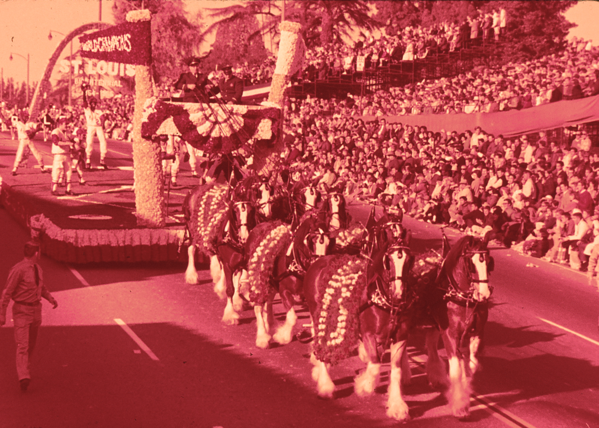 The St. Louis float in the 1965 Tournament of Roses Parade. This impressive float featured the Budweiser Clydesdales, the Arch and St. Louis Cardinals baseball players.