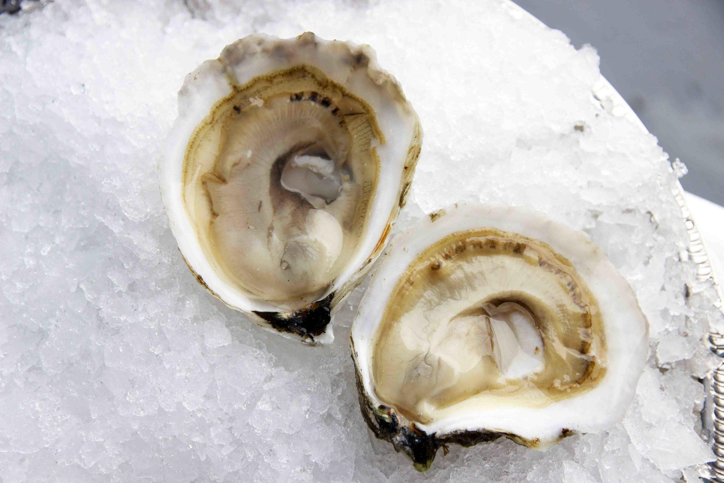 Pangea Shellfish Standish Shore Oyster Open LR.jpg