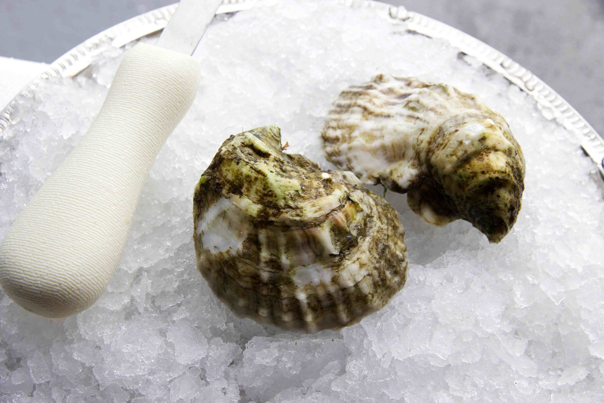 Pangea Shellfish Standish Shore Oyster Shell 2 LR.jpg