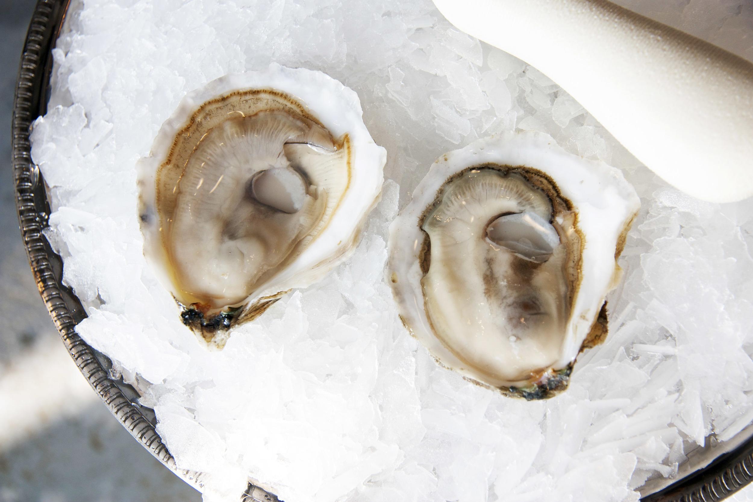 Pangea Shellfish Standish Shore Petites.jpg