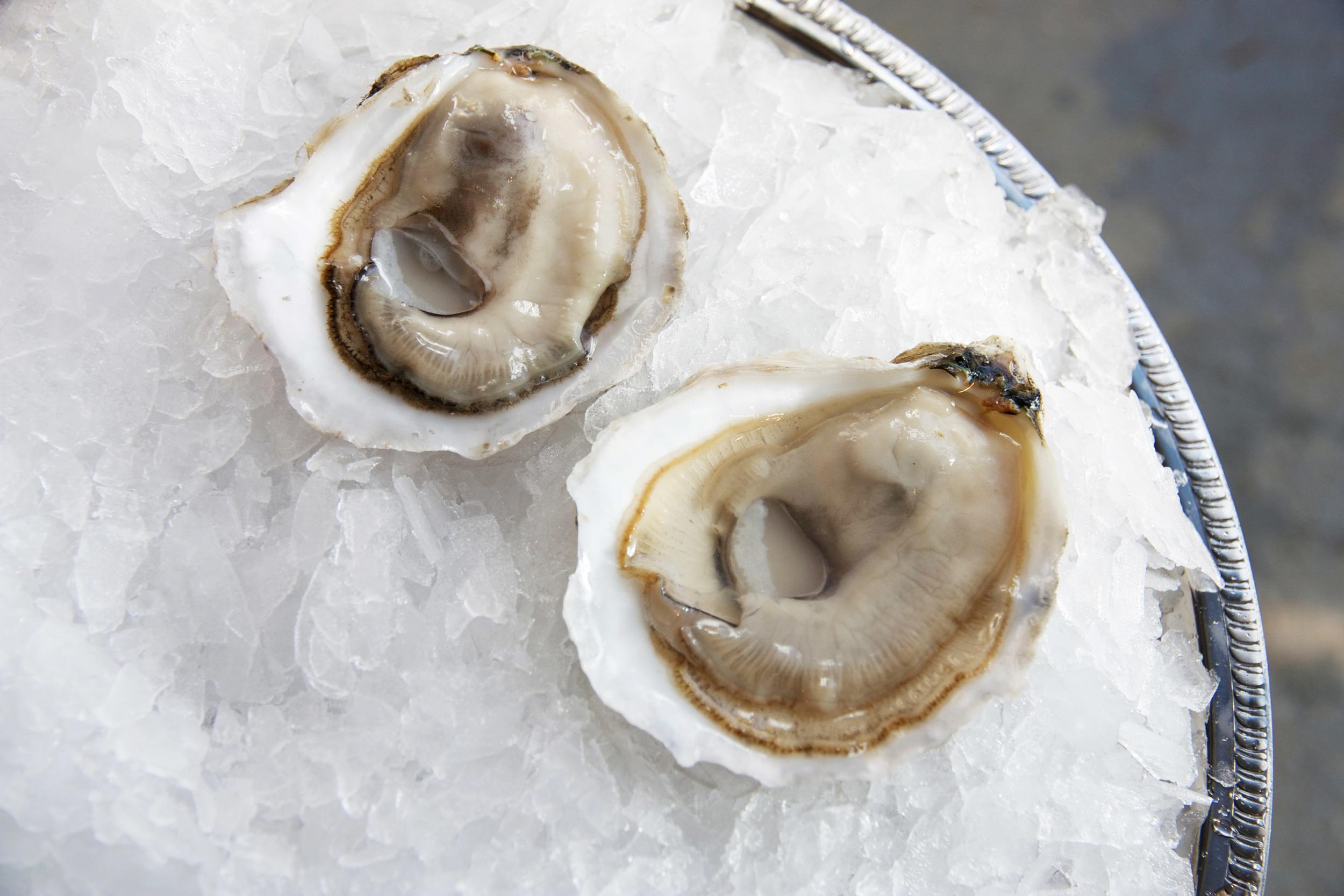 Pangea Shellfish Standish Shore Petite 2.jpg