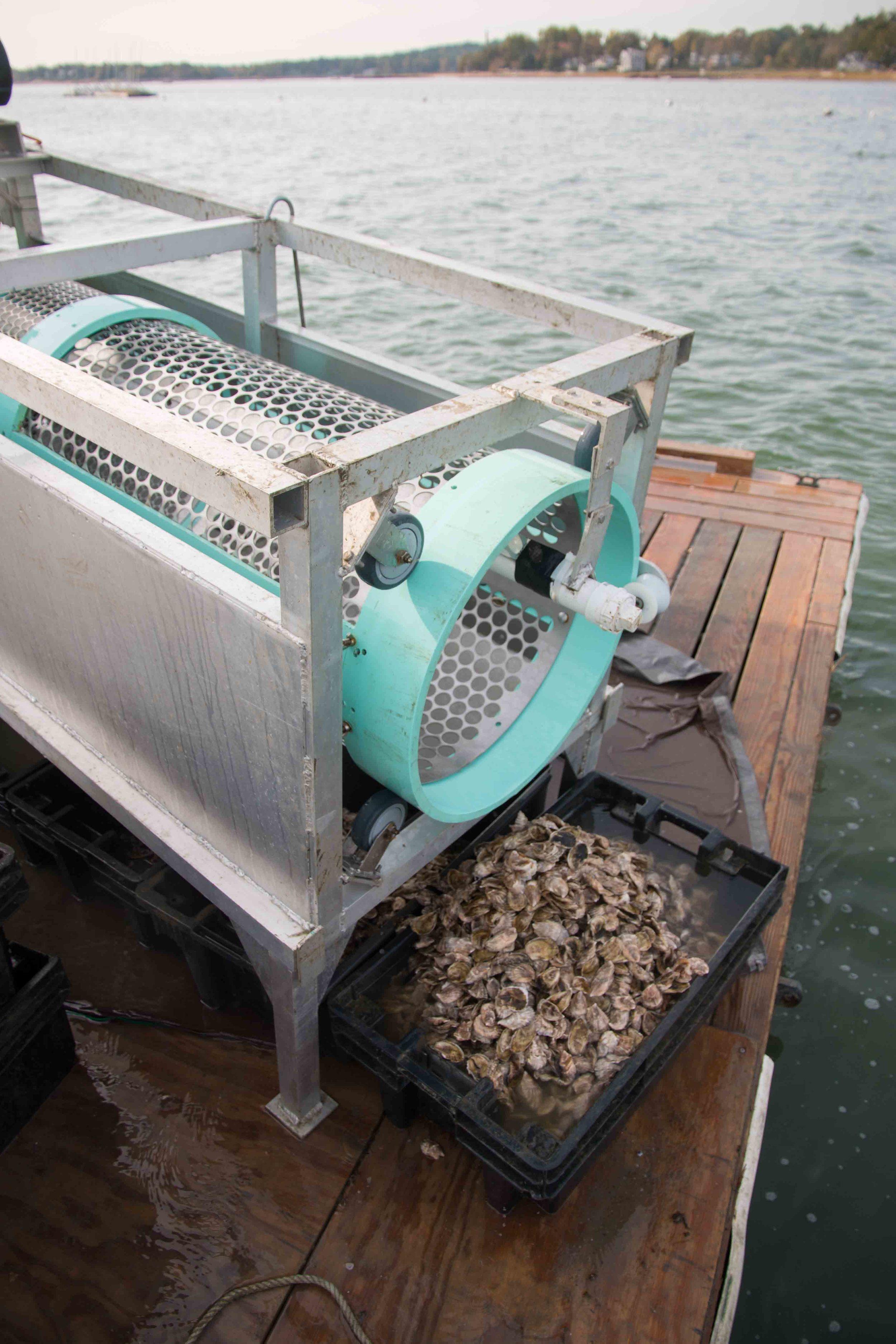 Custom oyster tumbler