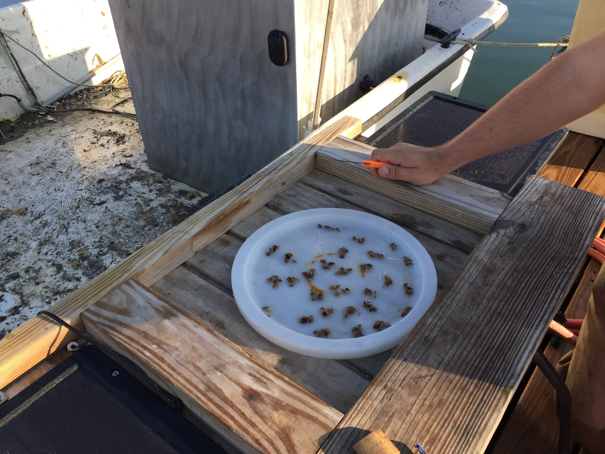 Counting seed