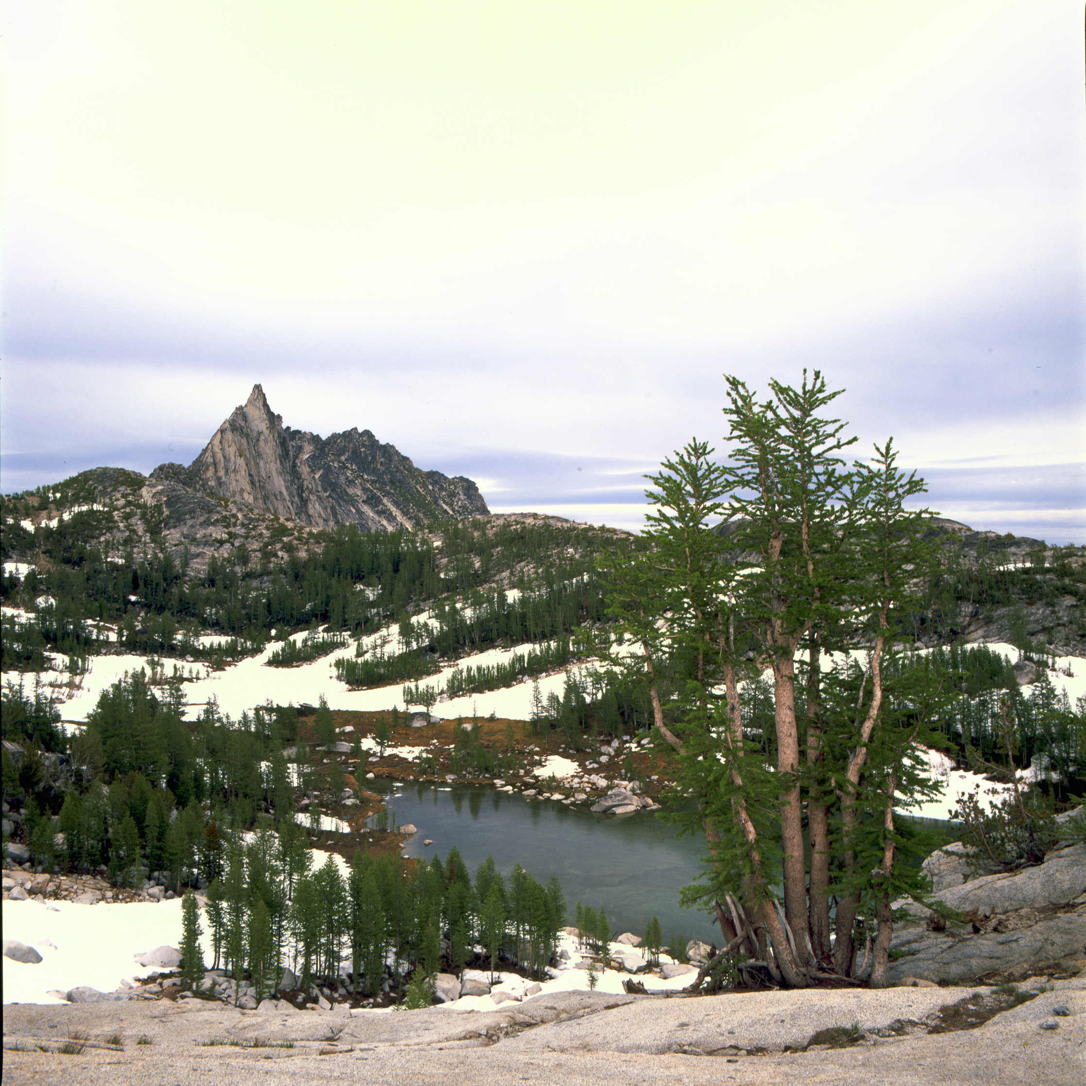 Prusik Peak  - Prusik Peak hanging above perfection lake, with Larch Pines in the foreground.
