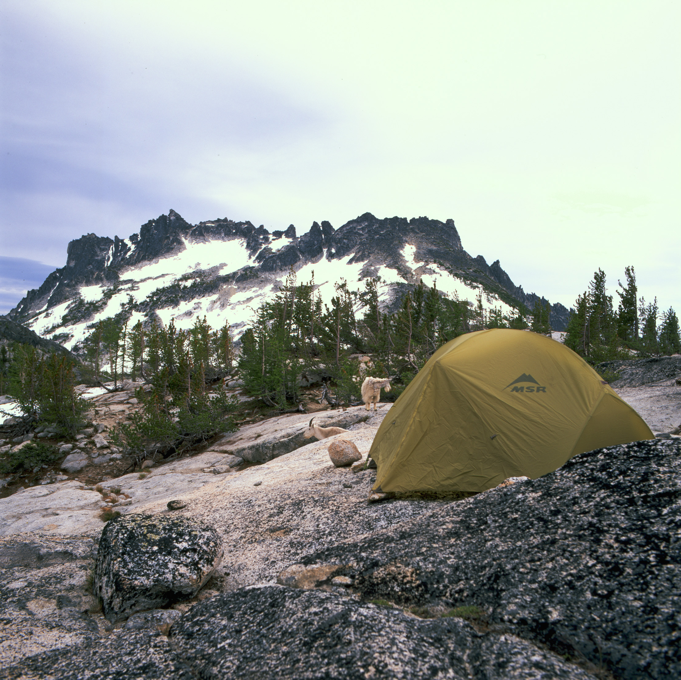 Coexist - My MSR tent at the top of a granite dome with Mt. McClellan in the background. As you can see, this was also home to a herd of mountain goats. This is where my tent tried to blow off the mountain.