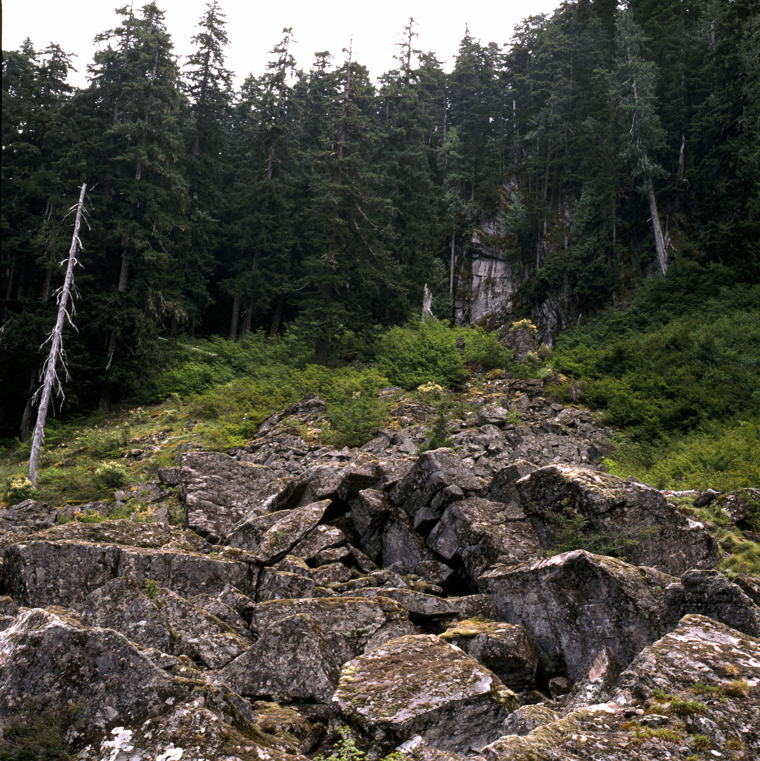 The Rewilding Area of Lost Lake Boulders, looking up to the cliff side in the woods.