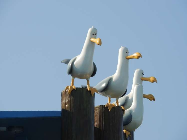 Art-of-Animation-473-Finding-Nemo-Seagulls-at-AoA-in-Florida.JPG