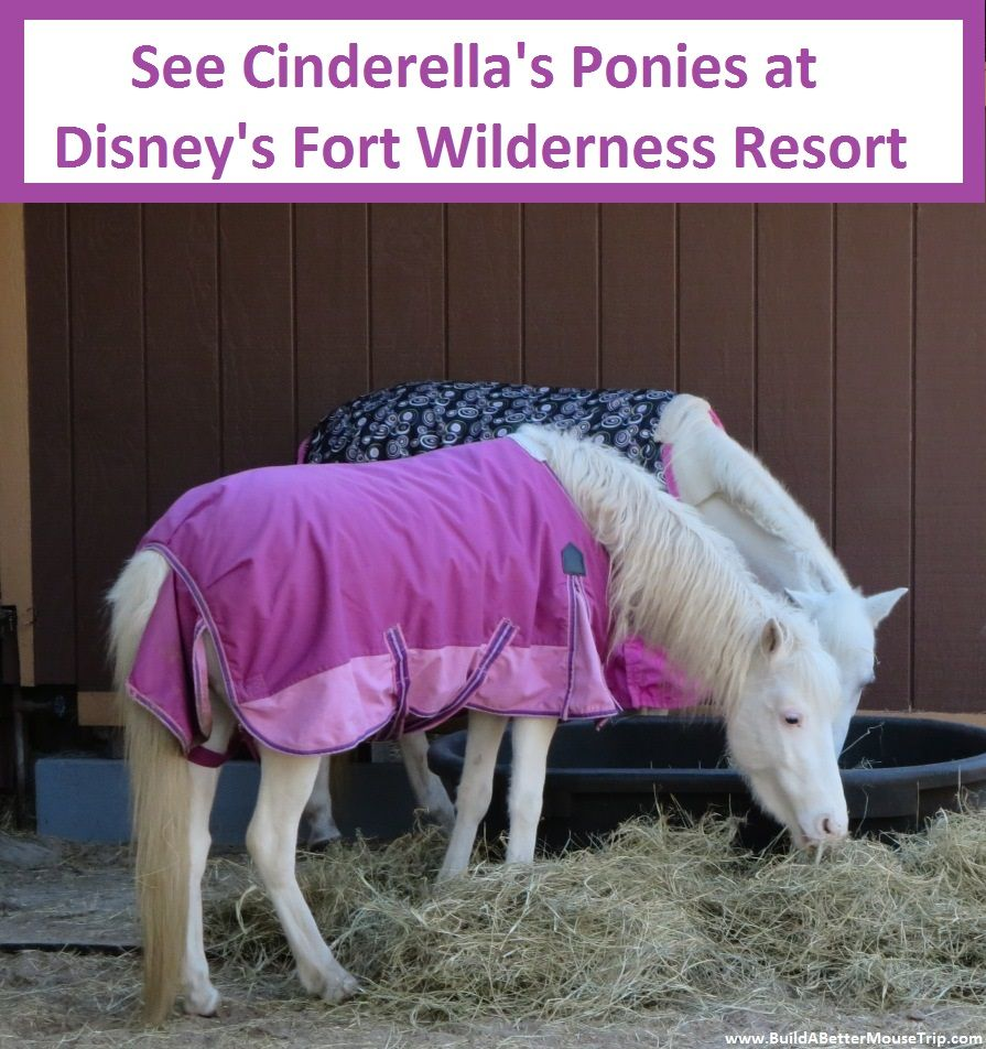 Disney World Totally Free Activity - See Cinderella's Ponies at Disney's Fort Wilderness Resort and Campground - Walt Disney World Resort - Florida