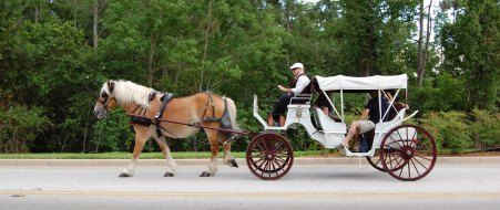 All about horse-drawn carriage rides & wagon rides at Disney World.