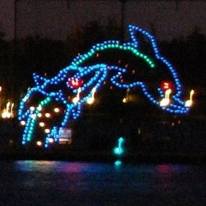 Leaping dolphin in the Electric Water Pageant