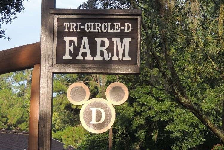 Tri-Circle-D Farm, at Disney's Fort Wilderness Resort, is home to all the Disney World horses. You can see them for free or pay for various horse excursions like wagon rides, trail rides, and pony rides.