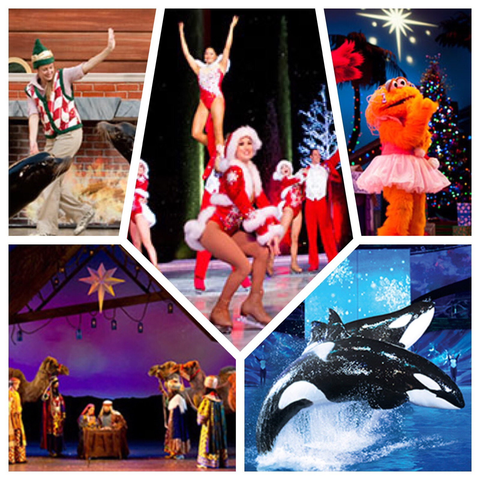 Christmas at SeaWorld - 5 Great Holiday Shows: Clyde & Seamore's Countdown to Christmas, Winter Wonderland on Ice, Elmo's Christmas Wish, O Wonderous Night, and Shamu Christmas Miracle