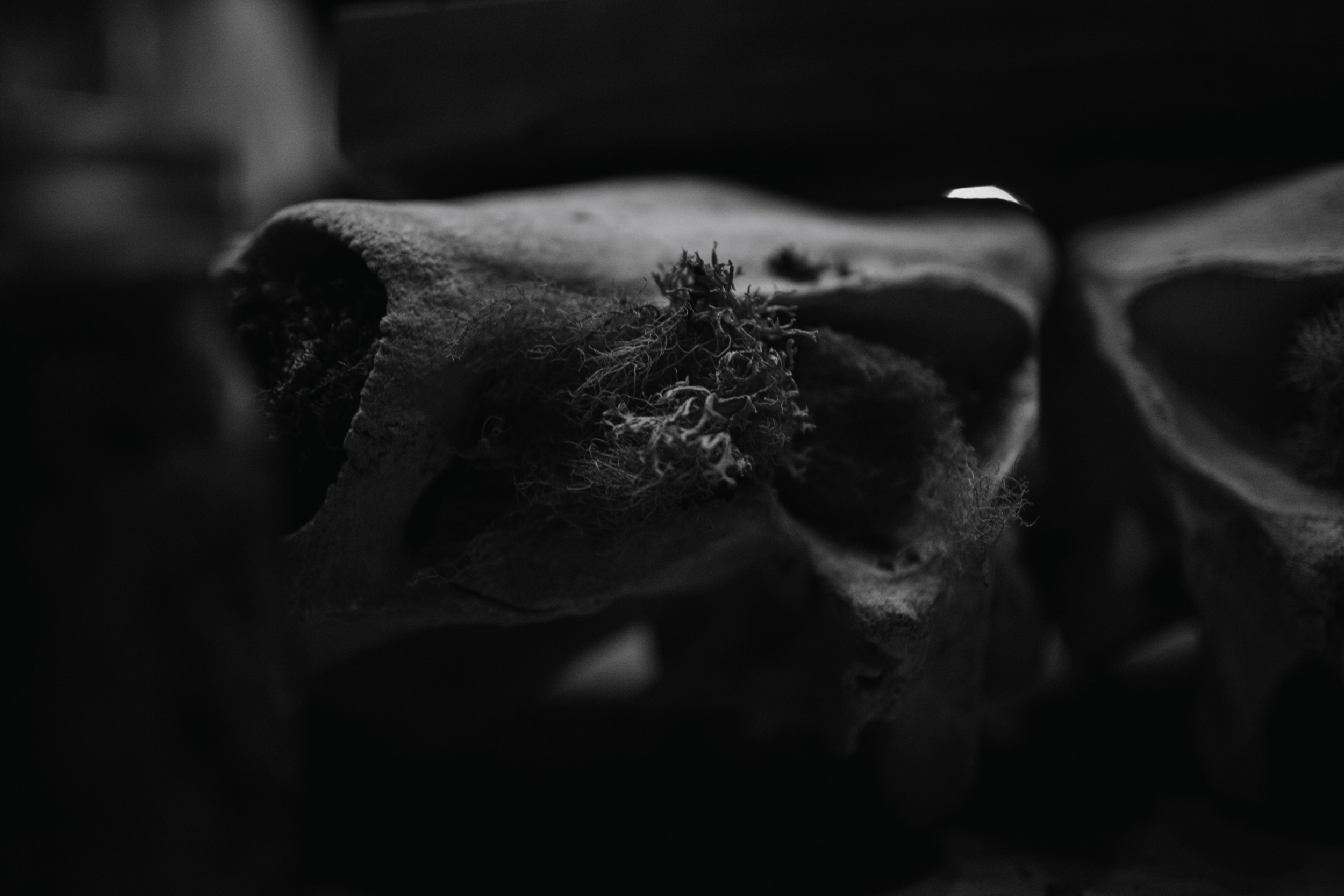 hayfork-193.jpg