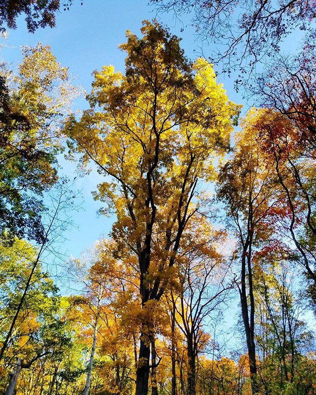 Pennsylvania Fall. #fallcolors #trees #andrewwyeth #lookingup #landscape #vividfall #nathography #nwp @rwillson14 #naturephotography #naturgram