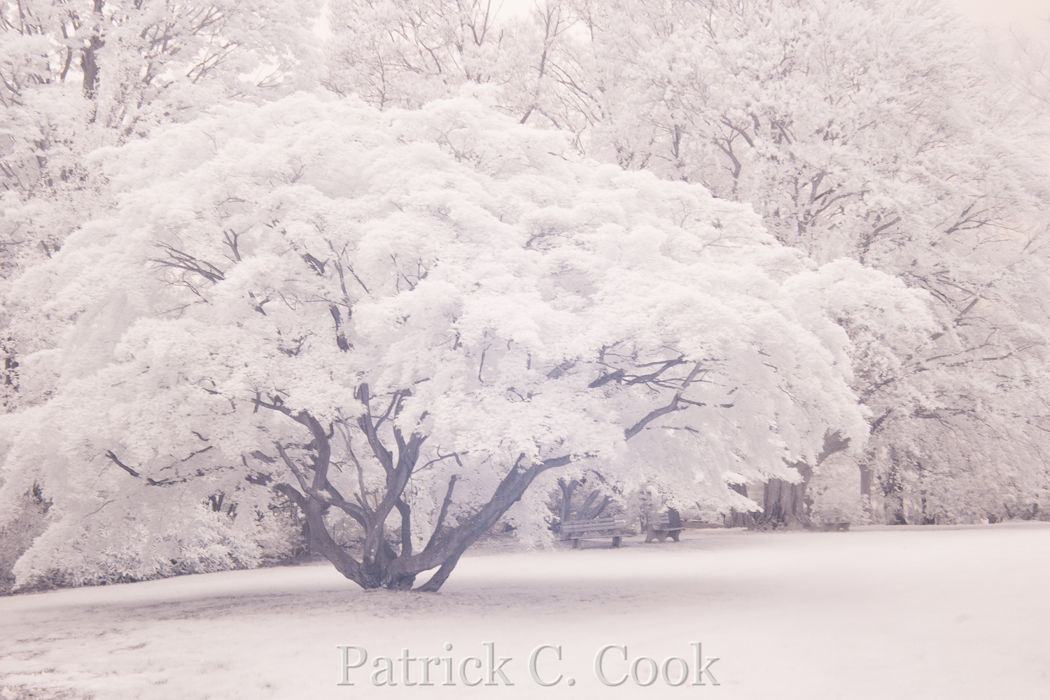 My very first digital infrared photo.