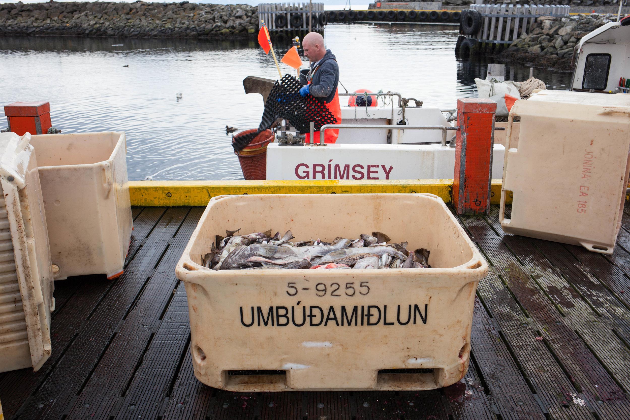 Grimsey Fishing pt. 2 WEB_2016_Katrina Jane Perry-2212.jpg