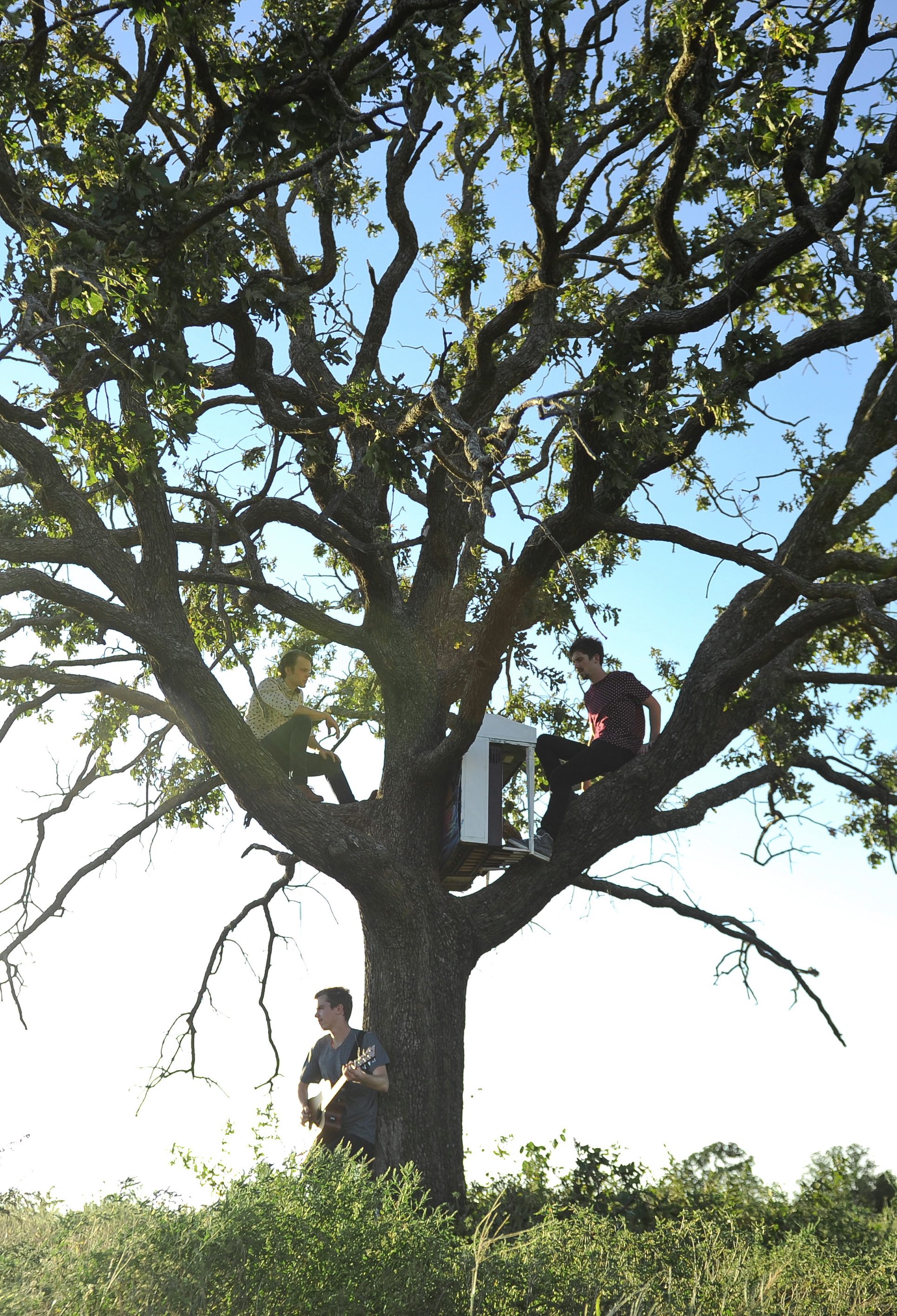 Long Tree Aluma.jpg
