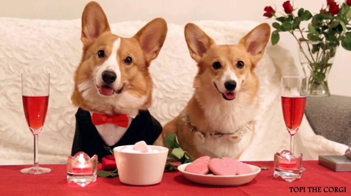 corg dinner date.jpg