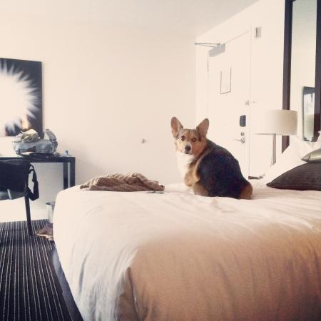 corg hotel 1.jpg